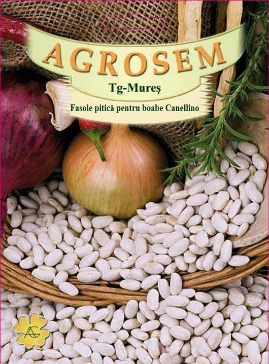 Seminte de Fasole pitica pentru boabe Canellino - 25 kg - AS - Phaseolus vulgaris