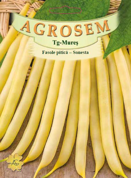 Seminte de Fasole pitica galbena Sonesta 25 kg - AS - Phaseolus vulgaris var. nanus