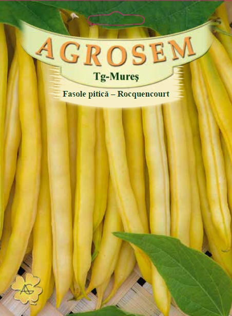 Seminte de Fasole pitica galbena Rocquencourt  25 kg - AS - Phaseolus vulgaris var. nanus