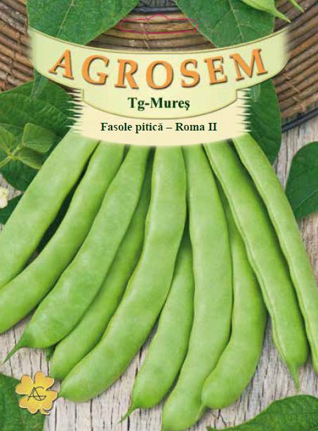 Seminte de Fasole pitica Roma II - 25 kg - AS - Phaseolus vulgaris var. nanus