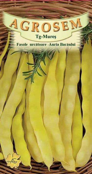 Seminte de Fasole urcatoare Auria Bacaului 25 kg - AS - Phaseolus vulgaris