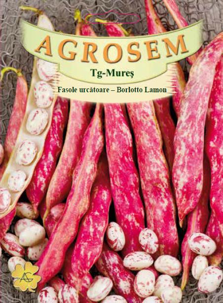 Seminte de Fasole urcatoare Borlotto Lamon - 25 kg - AS - Phaseolus vulgaris var. vulgaris