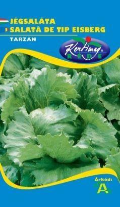 Seminte de Salata tip eisberg Tarzan - KM - Lactuca sativa var. capitata