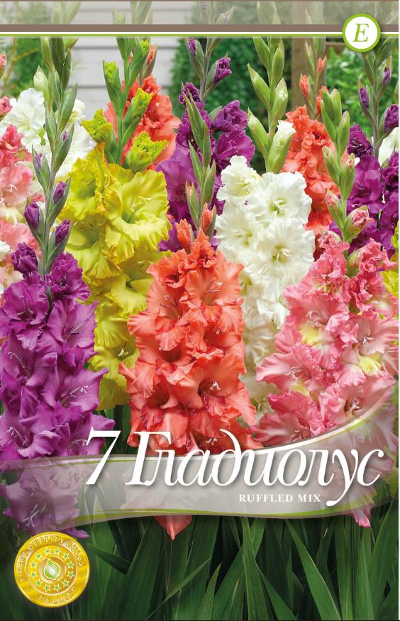 Gladiole bulbi Ruffled mix - 7 bulbi