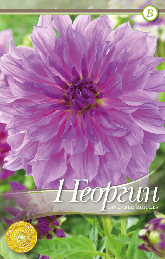 Dahlia decorative Lavender Ruffles - 1 bulb