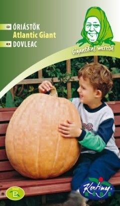 Seminte de Dovleac Atlantic Giant - GB - Cucurbita maxima Atlantic Giant
