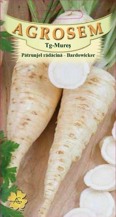 Seminte de Patrunjel radacina Bardowicker 500 g - AS - Petroselinum crispum