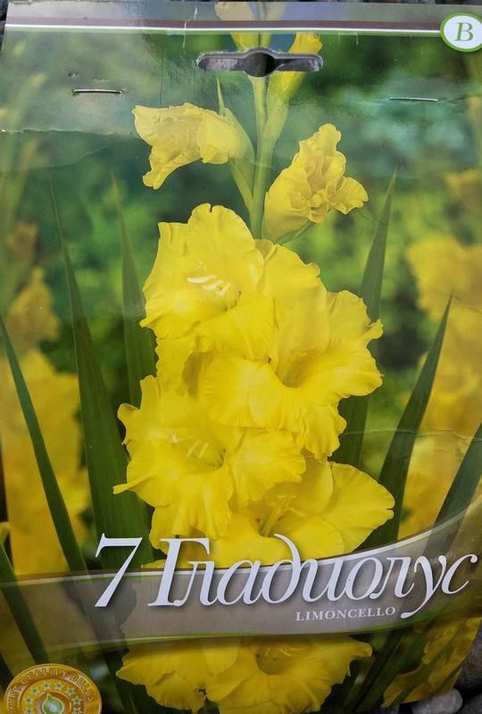 Gladiole bulbi Limoncello - 7 bulbi