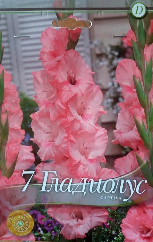Gladiole bulbi Captiva - 7 bulbi