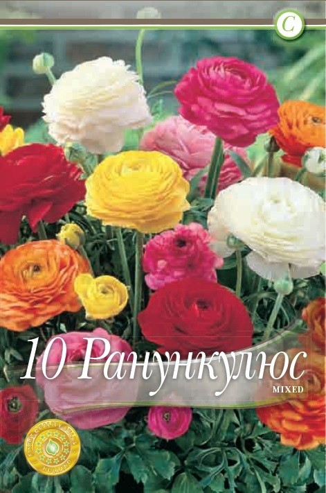 Ranunculus mix - 10 bulbi